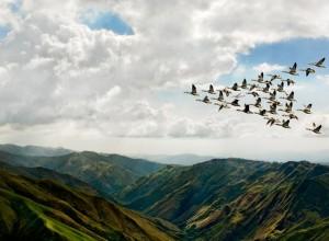 Птицы, летящие на юг