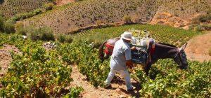 Плодогодные малагские горы